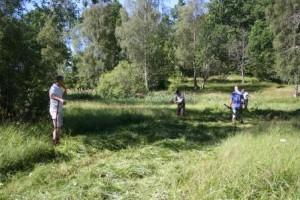 Den frodiga grönskan på ön Kringlan är lätt att slå